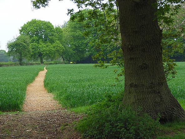 Footpath,_Park_Corner_-_geograph.org.uk_-_427499.jpg