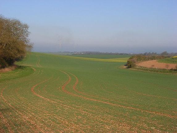 Farmland,_Nuffield_-_geograph.org.uk_-_769655.jpg