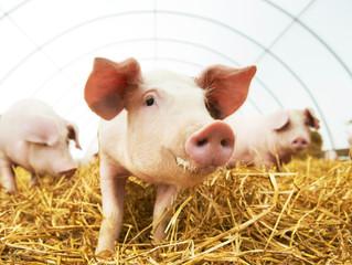 XII отраслевая бизнес-конференция Russian Meat& Feed 2021 «Индустрия мяса и комбикормов»