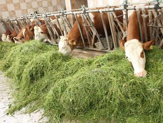 Хозяйства Вологодской области обеспечены кормами на 100%