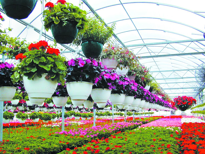 Букеты композиции, белая дача цветы купить
