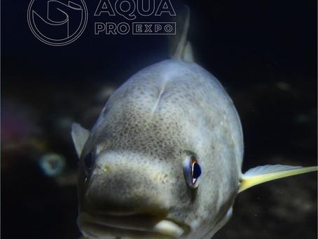 Выставка рыбной индустрии AquaPro Expo пройдет в Москве в августе