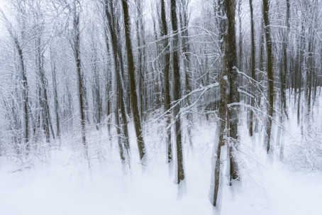 Bokskog i vinterskrud