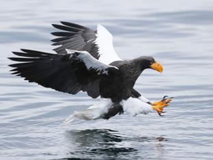 eagles-2053-(2).jpg