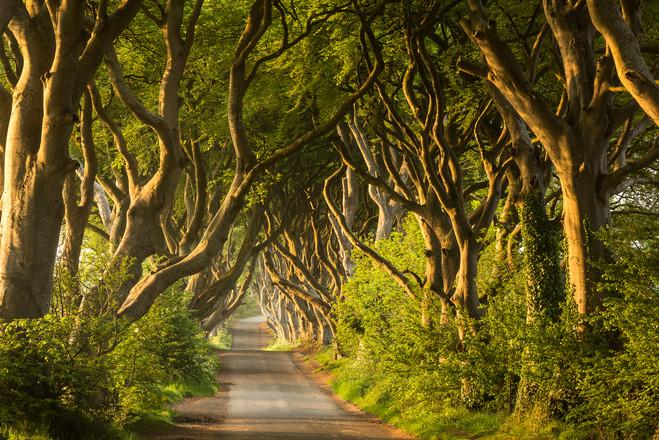 Dark Hedges, Nordirland