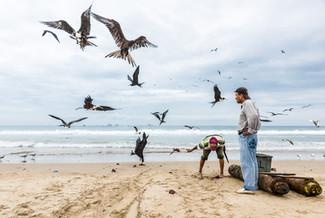 Fregattfåglar, San Pedro, Ecuador