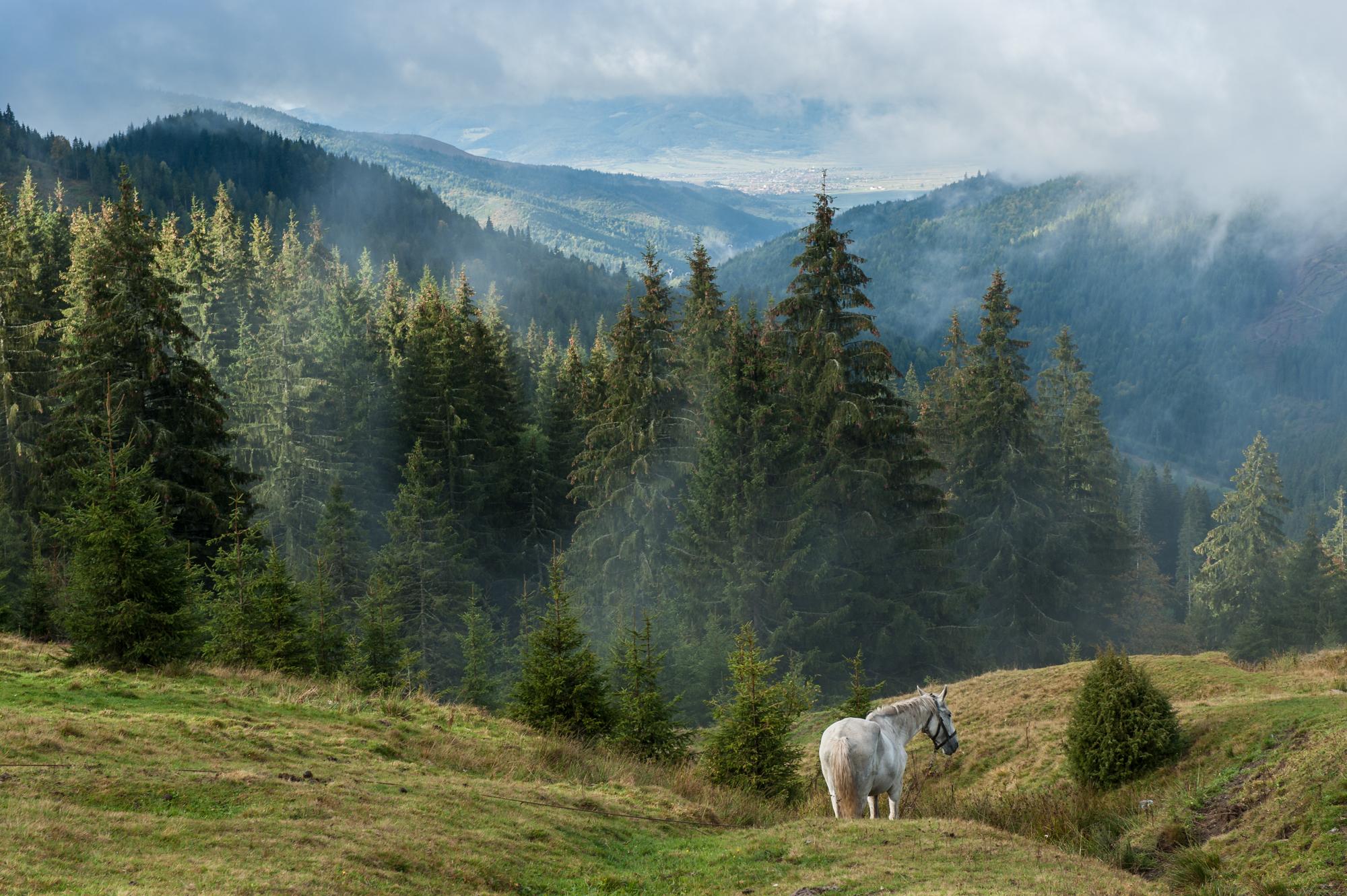 Bicazpasset, Rumänien