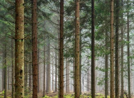 Vad är en skog?