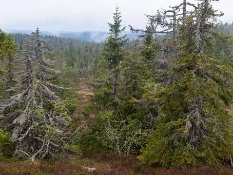 Klimatet och skogen