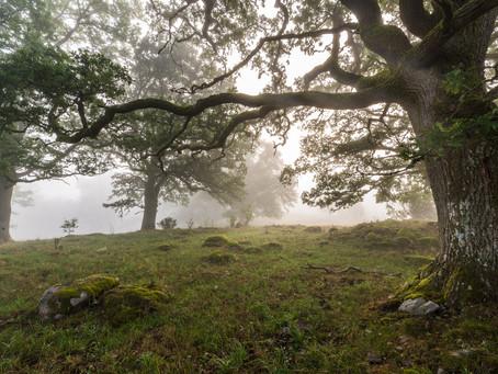 Landskaps-fotografering