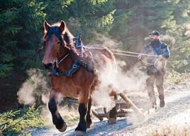 Skogskörning, Berghem, Västergötland