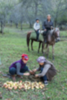 Äppelplockare Kirgizistan