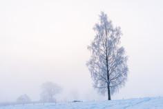 Dimmig vintermorgon