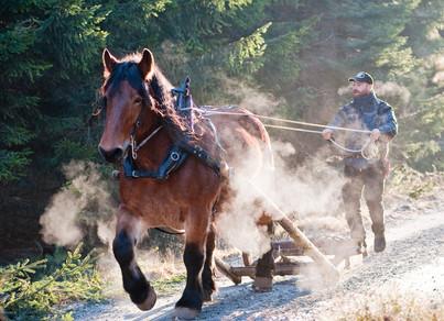 Hästkörning, Berghem, Västergötland