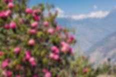Landskap i Nepal