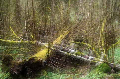 Skogsmyller