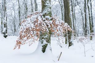 Bok i vinterskrud