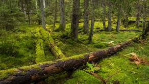 En riktig skog eller?