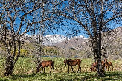 Hästar i Kirgizistan
