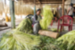 Panamahattillverkning Ecuador