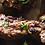 Thumbnail: +/- 510g Plain Rump Steak Skewers +BBQ sprinkle (3 x skewers)