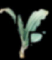 logo -02.png