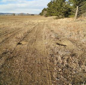Tire Marks Across Prairie Dog Area, January 2021 #2
