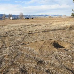 Tire Marks Across Prairie Dog Area, January 2021 #6