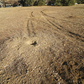 Prairie Dog Hole More Recent Than Tire Marks, January 2021