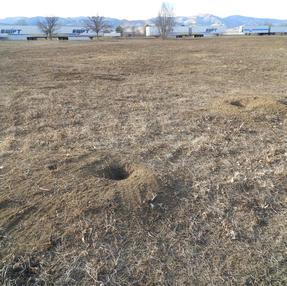 Tire Marks Across Prairie Dog Area, January 2021 #4
