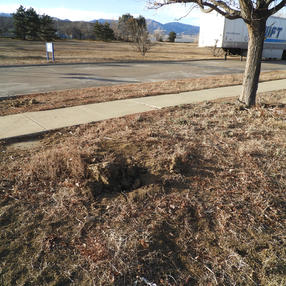 Prairie Dog Hole Filled In, January 2021