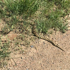 Snake On the LoBo Trail