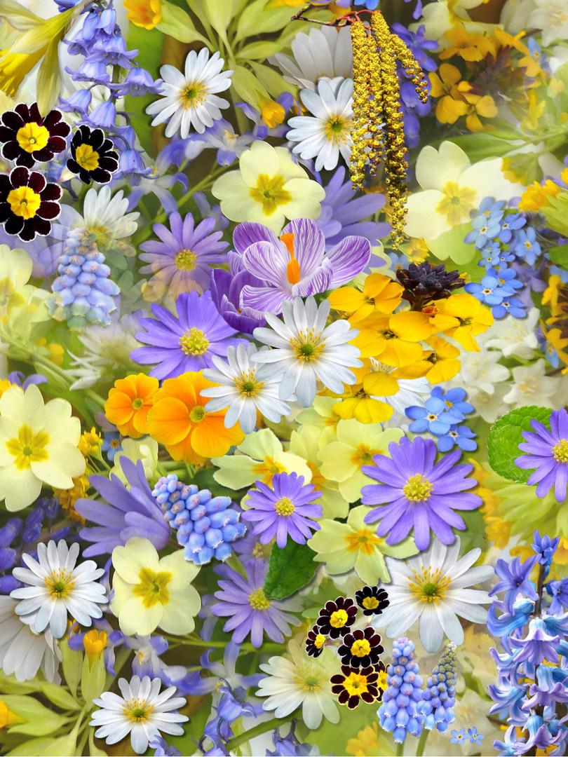 flowers-colorful-plants-bloom-68507.jpg