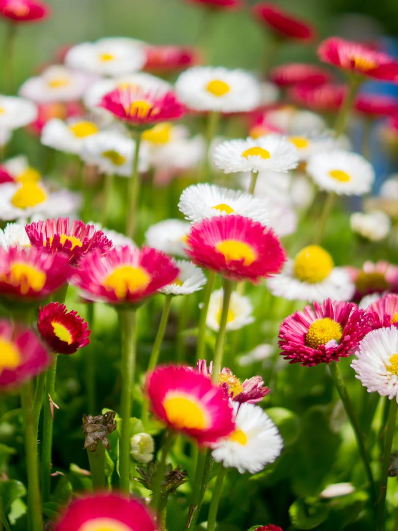 summer-flowers-909.jpg