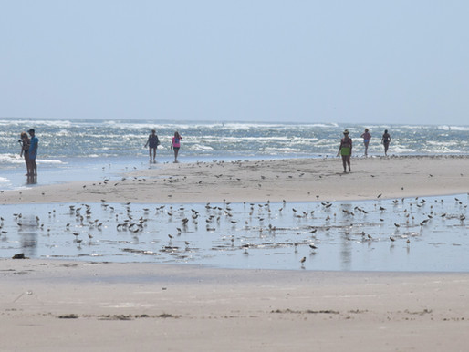 Corson's Inlet: Peaceful in OC, Tensions in Strathmere. Free Beach. Free Parking (Limited).