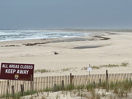 LBI's Wilderness Beach: 3 Forgotten Miles of LBI Where Plovers Rule the Roost in the Refuge
