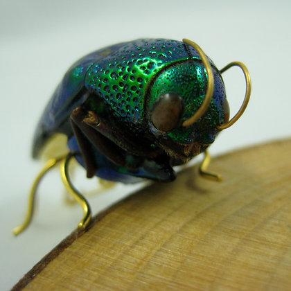 Real jewel Beetle Pin