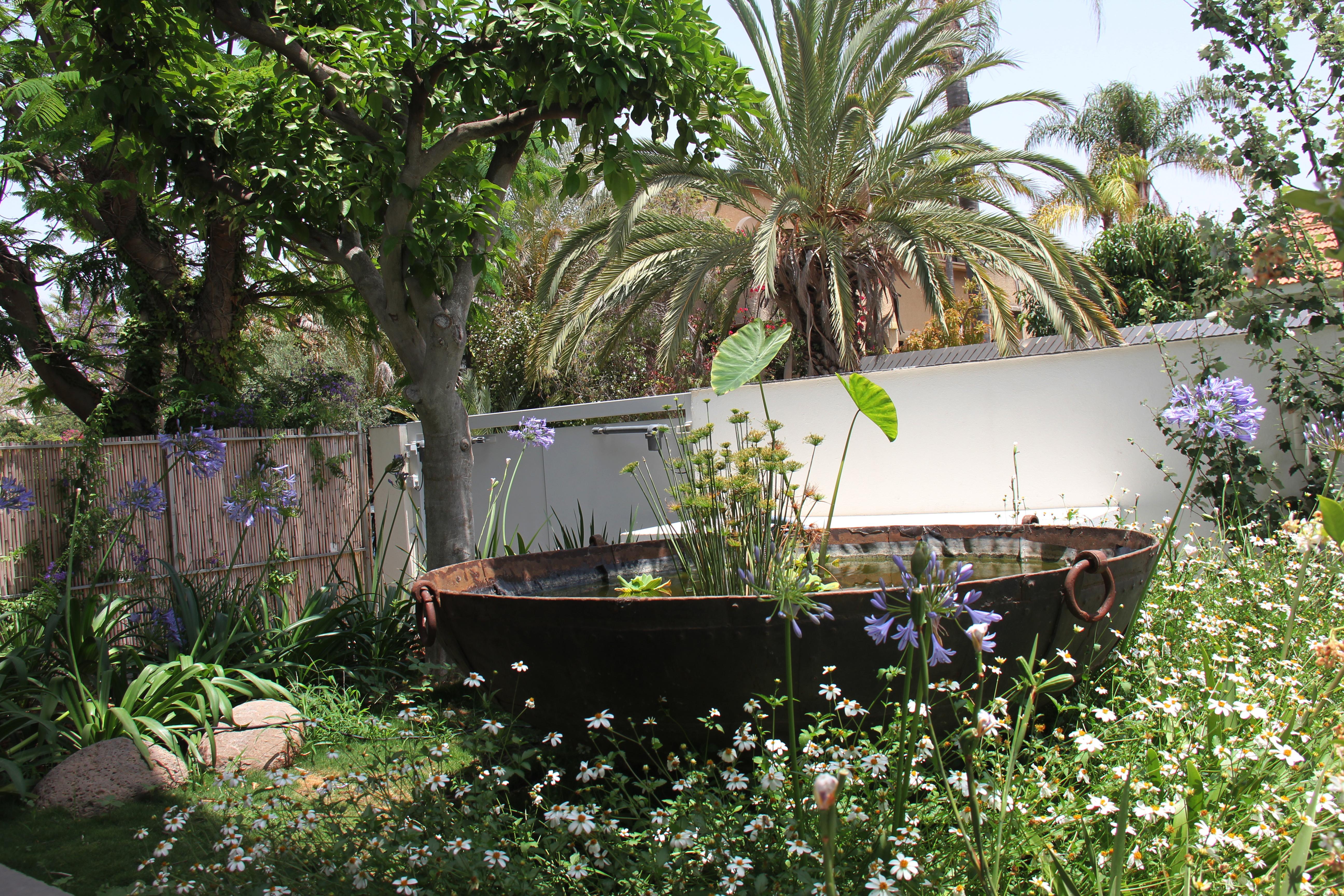 אלמנט מים בגינה