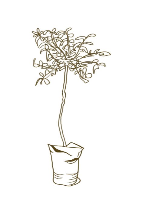 unplanted