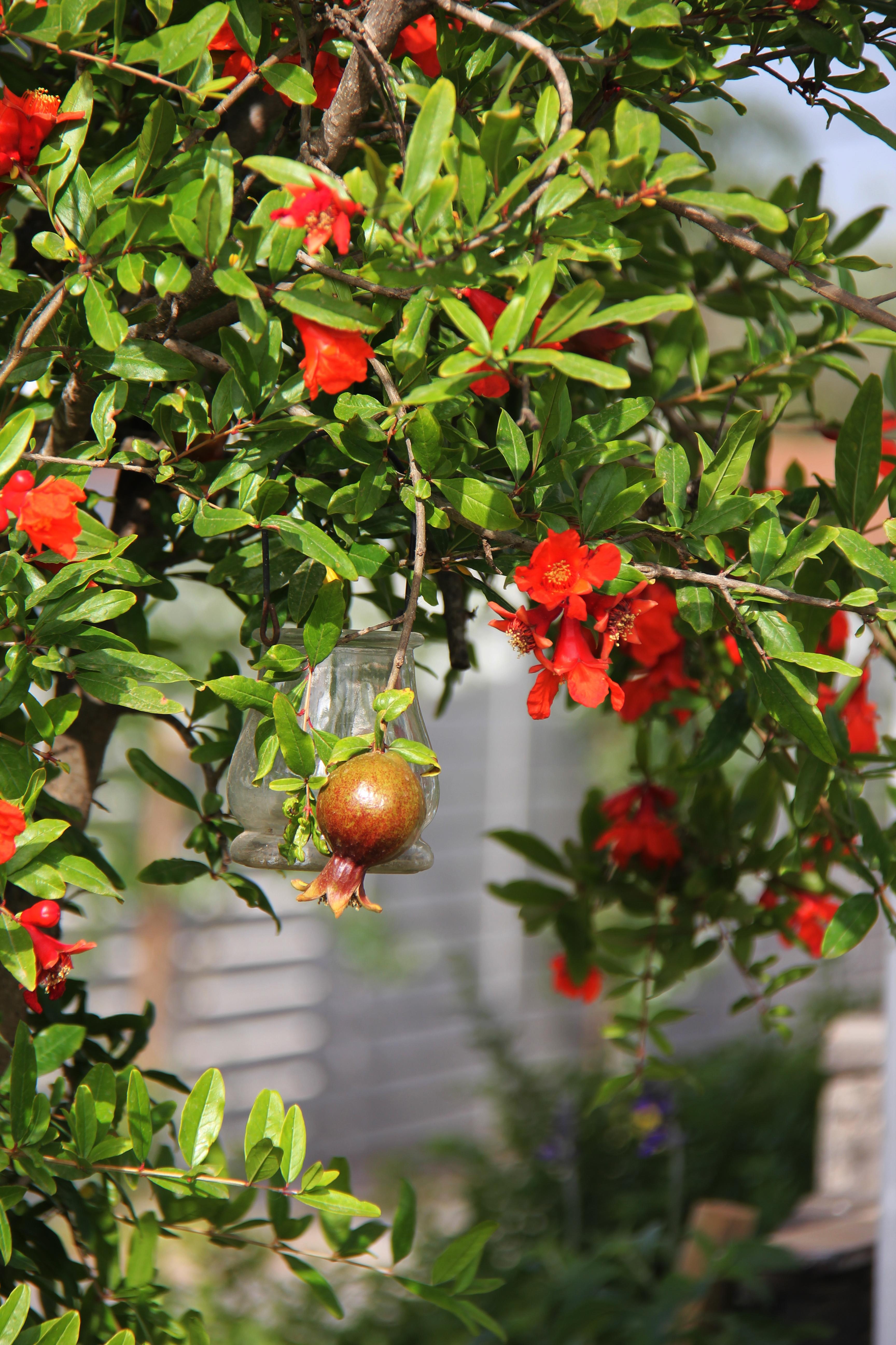 עצי מאכל בגינה