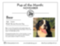 Pup of the Month _Dpp FLYER_nov-01.png