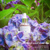 ACAI BERRY 90 PROTECTING AMPOULE