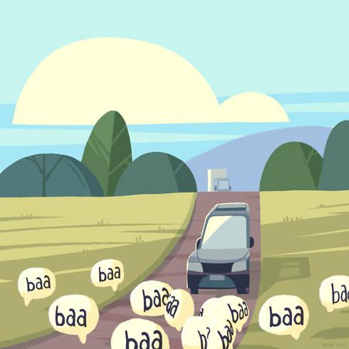 sheep_BurakCinar.jpeg
