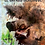 Thumbnail: Le Cafard hérétique numéro 7
