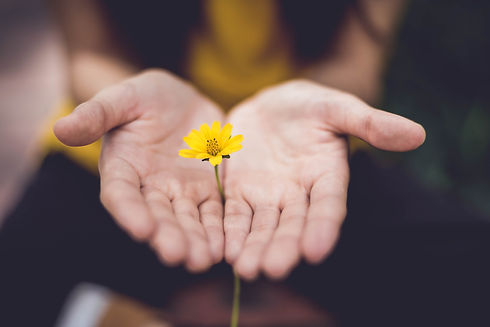 Flower cupped in hands