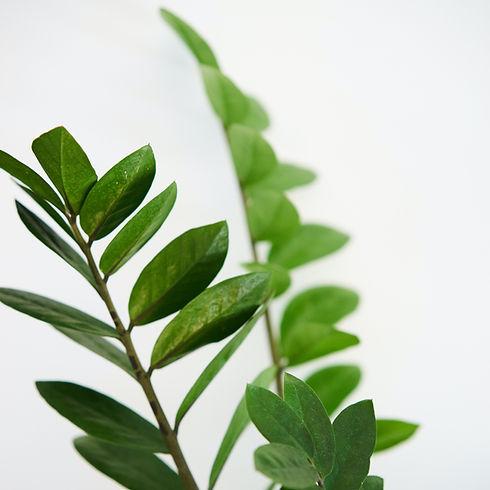 green-leaves3.jpg
