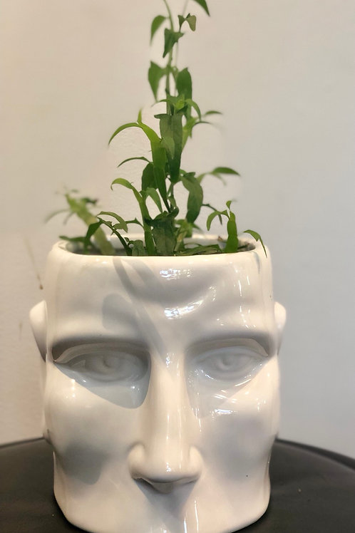Regular Head Pot