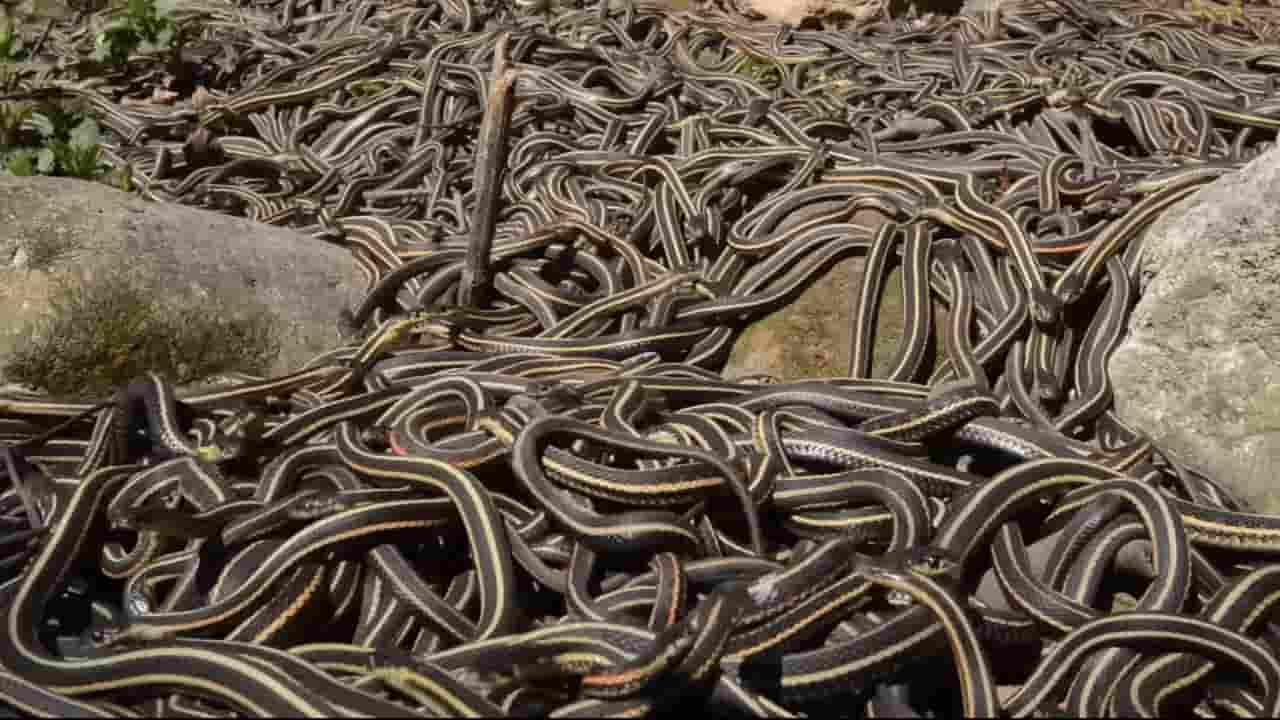 omg-mystery-of-snake-island-स्नेक आयलैंड