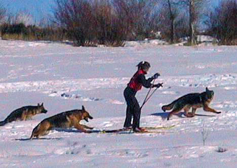 skiing with dogs.jpg