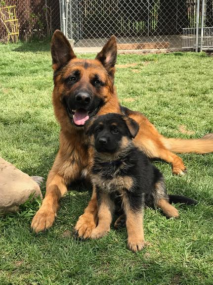 emmett and pup.jpg